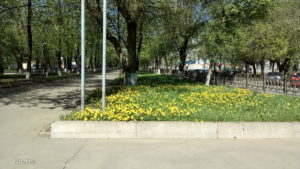 Blooming spring in Kirov
