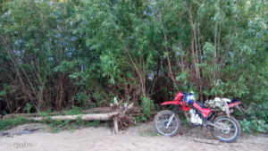 Jungle on the bank of the Vyatka River, motorcycle Lifan 200 gy-3b