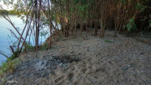 Remains of campfire, steep bank, jungle on the bank of the river Vyatka